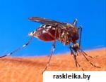 Малярия, что нужно знать о этой инфекции.