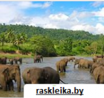 Шри – Ланка – это остров сокровищ.
