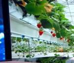 Свежий салат круглый год: Собянин пообещал поддержать сельхозпредприятия