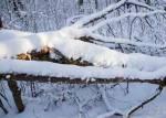 Вальщик леса погиб в Добрушском районе